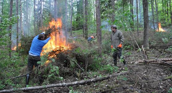Managing herb-rich forest.